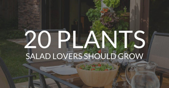 How to Grow Your Own Sensational Salads »